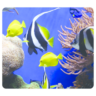 Fellowes Earth Series - Diep in de zee Muismat - Multi kleuren