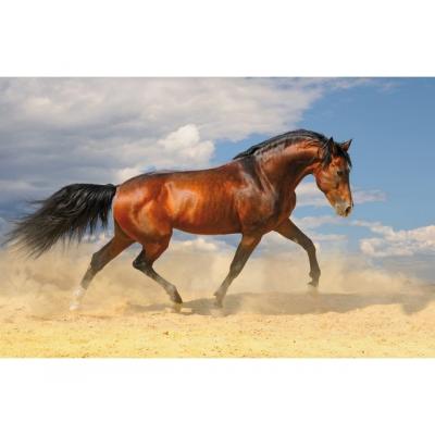 Kangaro bureaulegger: Paard